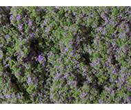 модель Auhagen 76931 Цветочный луг с фиолетовыми цветами