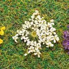 модель Faller 171830 Серия Premium.  Natur-Blüten weiss 100 St