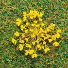 модель Faller 171831 Серия Premium.  Natur-Blüten gelb 100 St