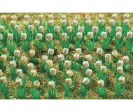 модель Vollmer 45125  Tulips in white.